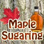Maple-Sugar-1